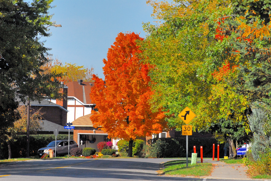 A Fall Afternoon on McCurdy Drive